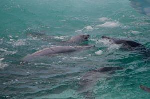 7 Seals